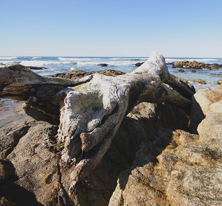 Pacific Grove & the Central Coast