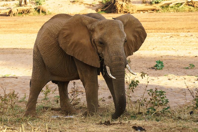 Kenya 2015-01177.jpg