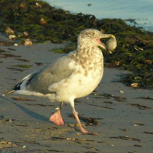 Cape Cod Fauna
