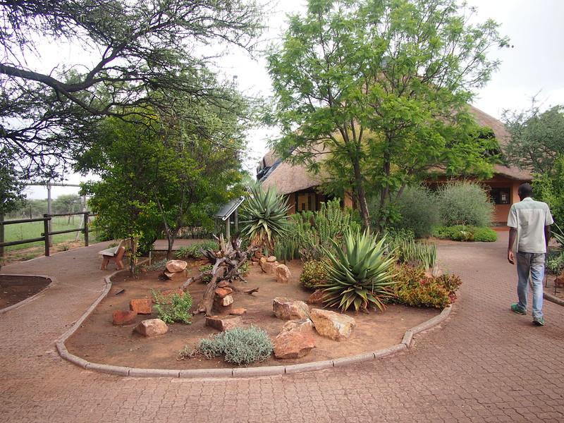 P3270982-garden.JPG