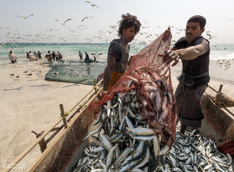Sardine Season (73)- Dhofar.jpg