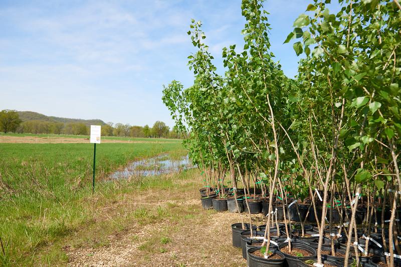 2017_UWL_Biology_Tree_Restoration_Meredith_Thomsen_Flood_Plain_0002.jpg