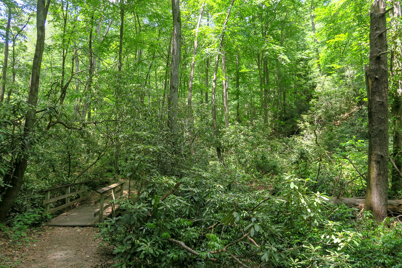 Andy Cove Nature Trail -- 2,180'