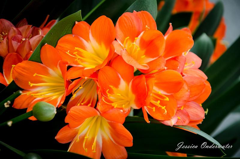 LGBG_art_JOP-0109.jpg