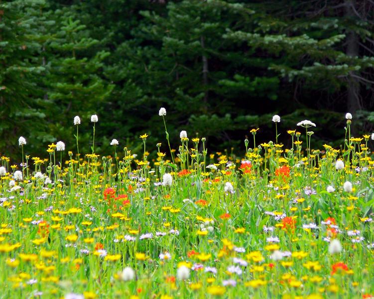 wildflowers16.jpg