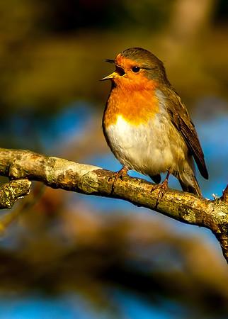 HCC Newsletter 04 April 2021 Birds