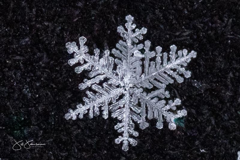 snowflakes-1200.jpg