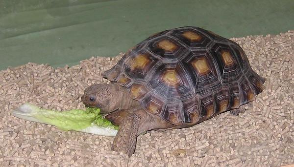 SoCal Turtles and Tortoises