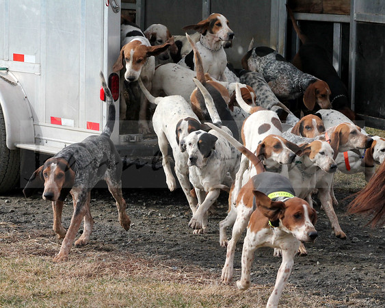 Snickersville Hounds at Banbury Cross 1-20-15