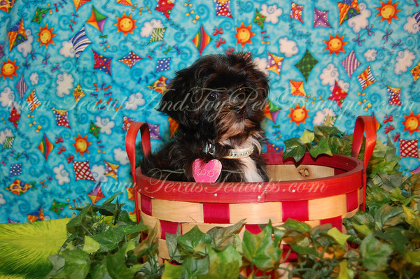 0 ADOPTED BY Kamilah M. Daisy Puppy 2283