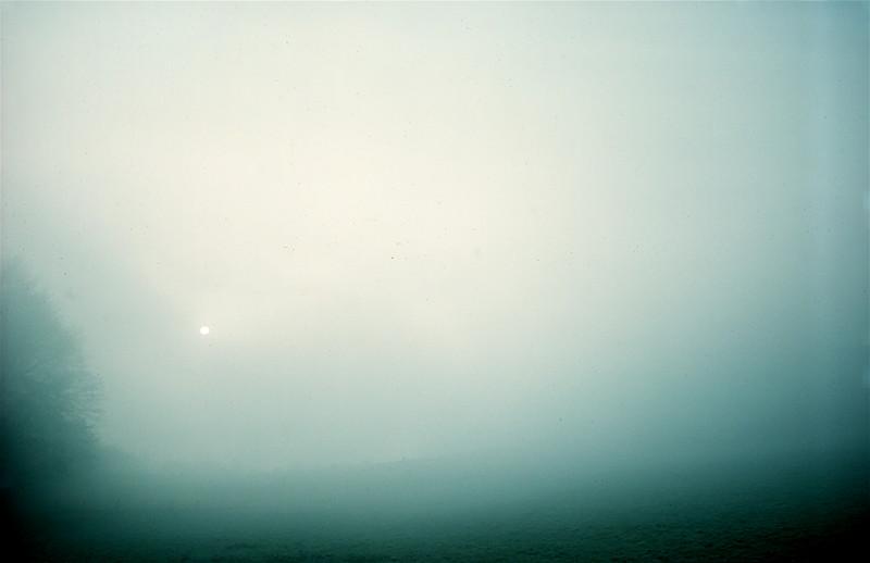 Sun and trees through freezing fog