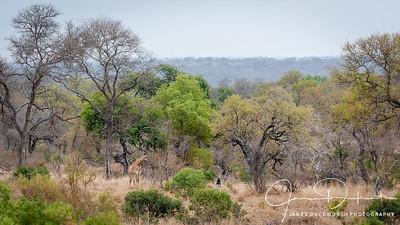 South Africa, Zimbabwe, Botswana
