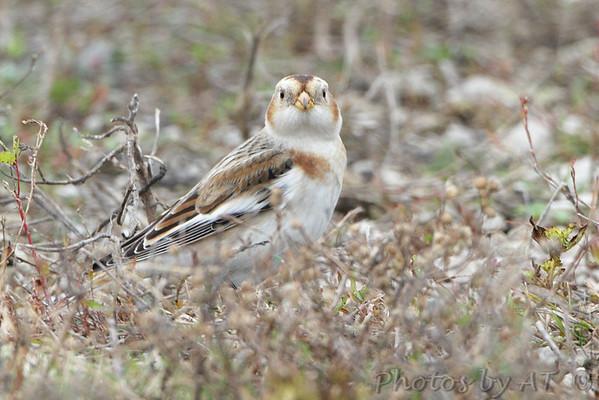 Birding 2014 November