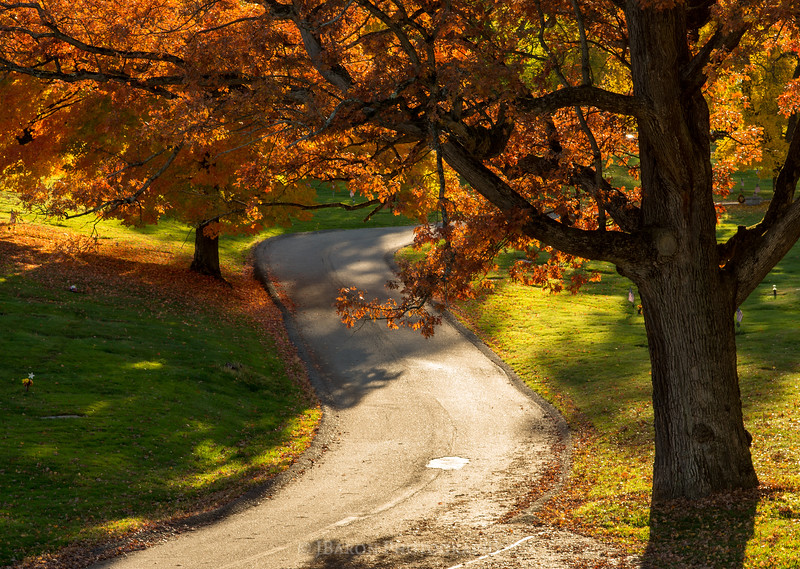 Winding Cemetery Road in Autumn