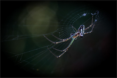 Arachnids