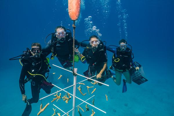 Coral Restoration Program