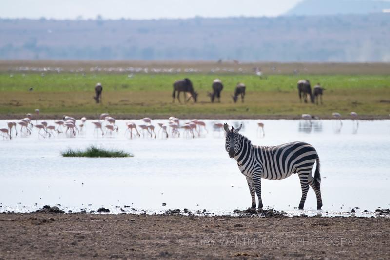 Jay Waltmunson Photography - Kenya 2019 - 149 - (DSCF4080).jpg