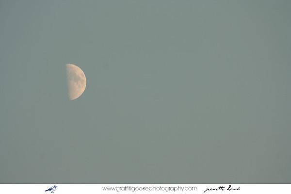 Summer moon.
