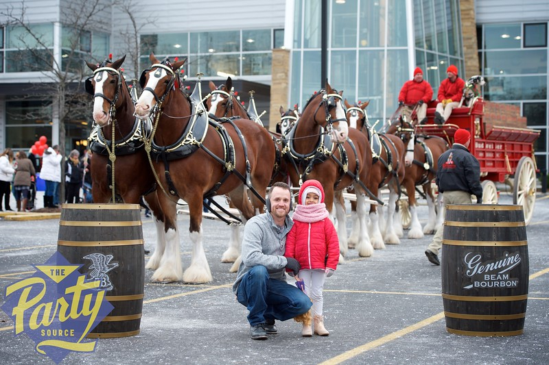 Clydesdale Portraits 57.jpg