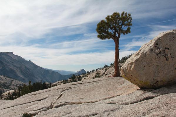 Upper Yosemite National Park 2014