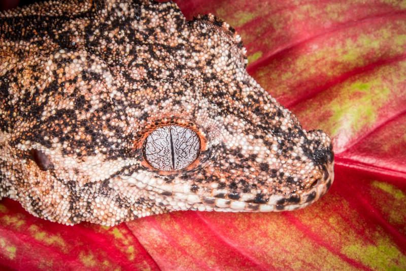 Frogs14jan17-4406.jpg