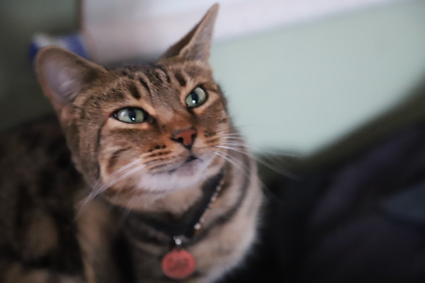 Canon 6D MK II Test Images