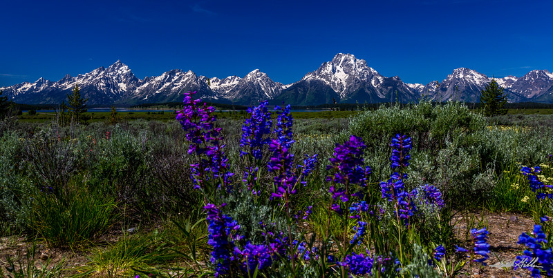Tetons beauty