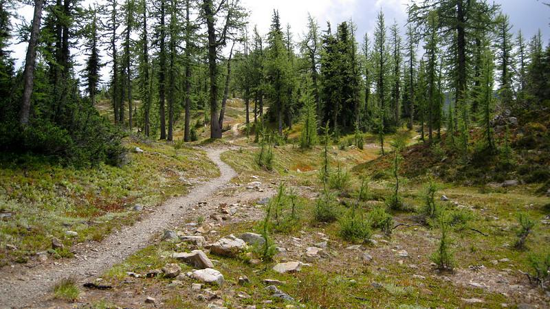 Grasshopper Pass.