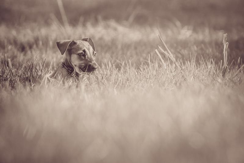 Roxy - Snake in Grass-.jpg