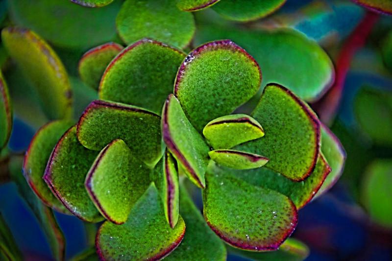 August 6 - Succulent.jpg