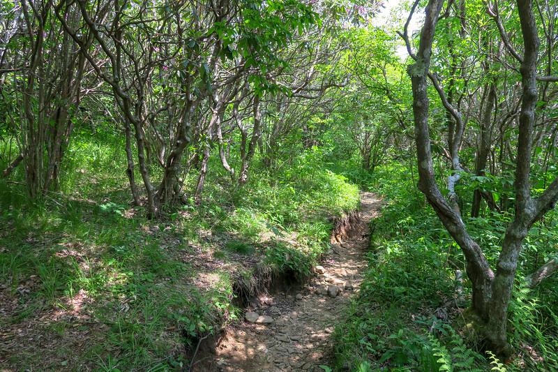 Art Loeb Trail -- 5,850'