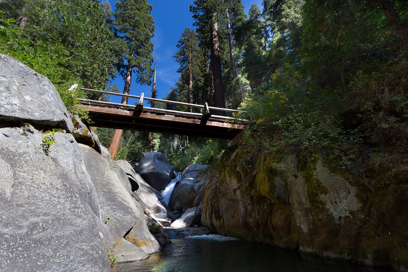 Sequoia_0398.jpg