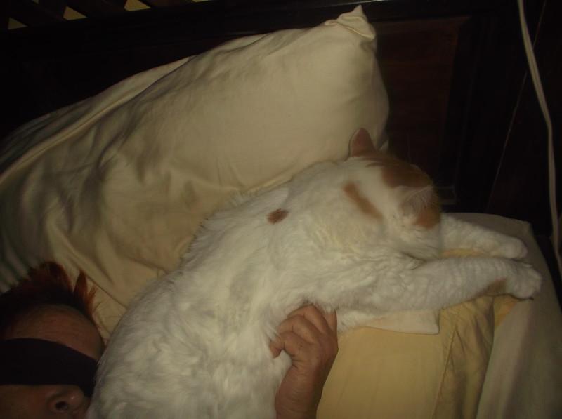 CatSleepingSprawl1.jpg