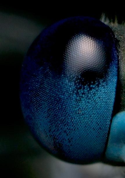 eyeballcrop4.jpg