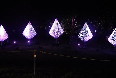 Morton Arboretum Illuminations 2020