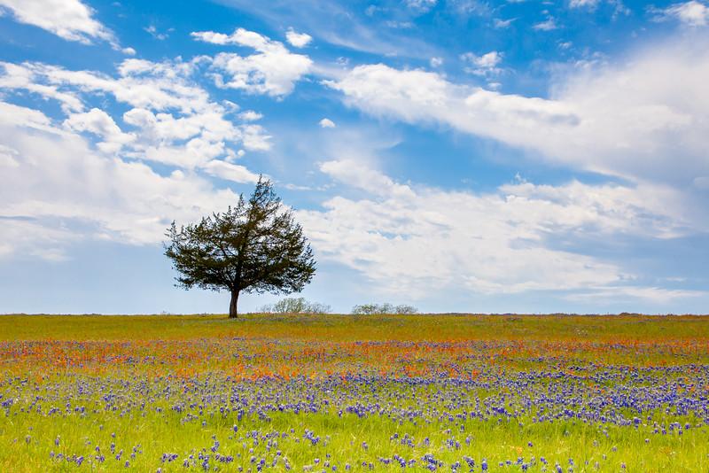 2016_4_9 Texas Wildflower Shoot-8655.jpg