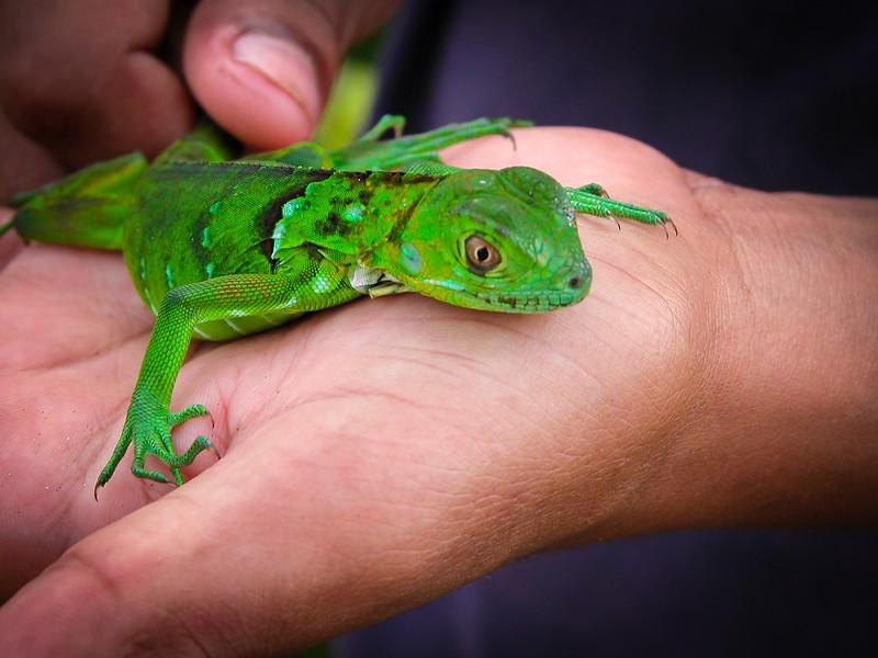 104 Gecko.jpg