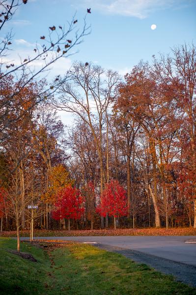 Fall Foliage -- 2014