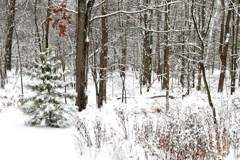 20121125 First Snow LIF_5728.jpg