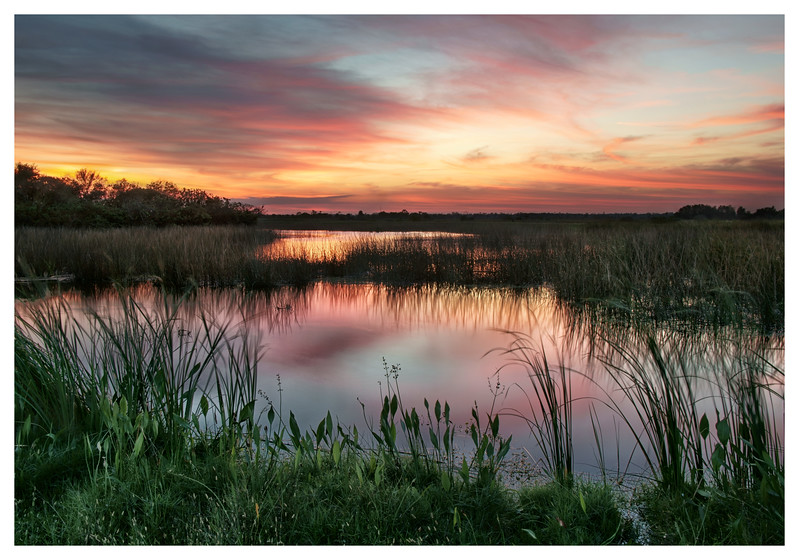 Wetland sunset.