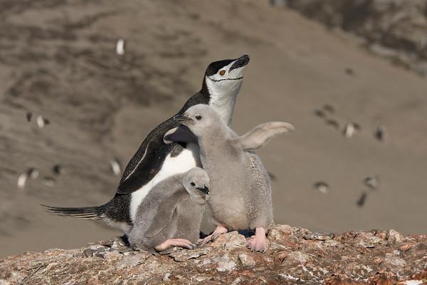2008  Falklands, South Georgia and Antarctica