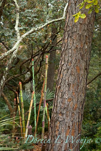 Peckerwood Garden_2034.jpg