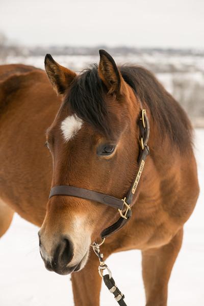 Cody | Horses