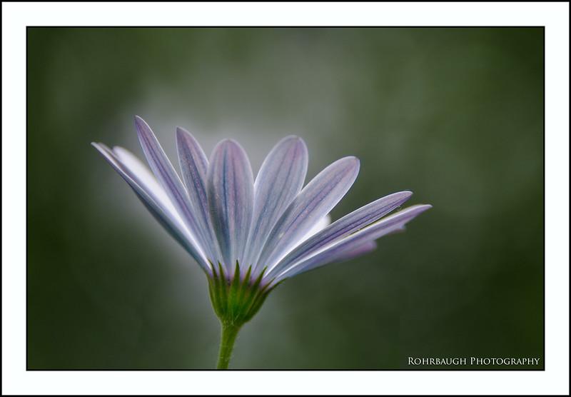 Rohrbaugh Photography Flowers 106.jpg
