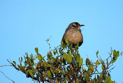 EM1 100-300 Birds Desert 2014