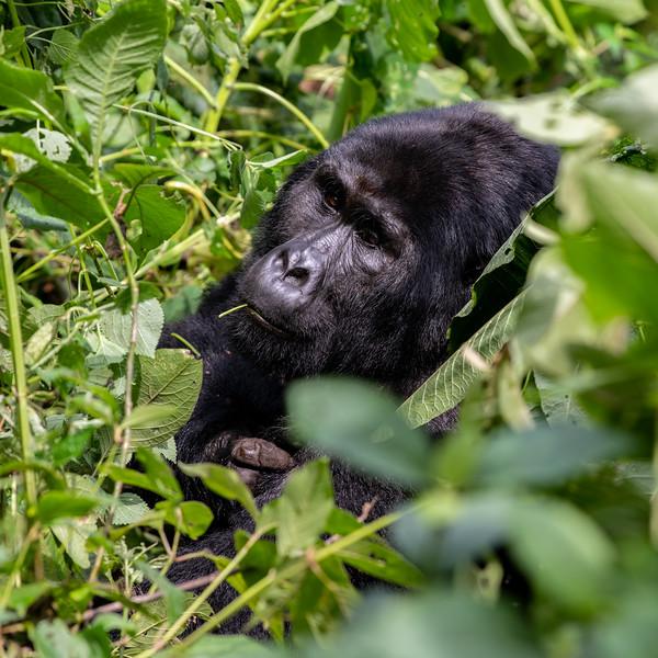 Uganda_T_Gor-1218.jpg