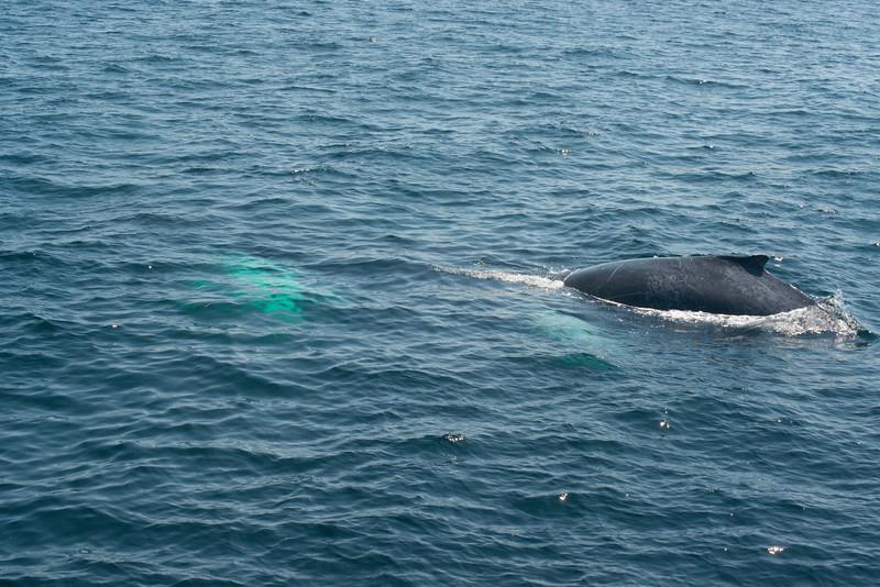 humpbacks-4202.jpg