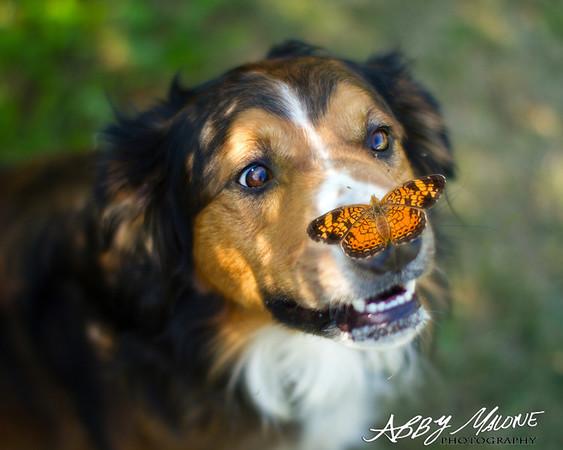 Benton Animal Control