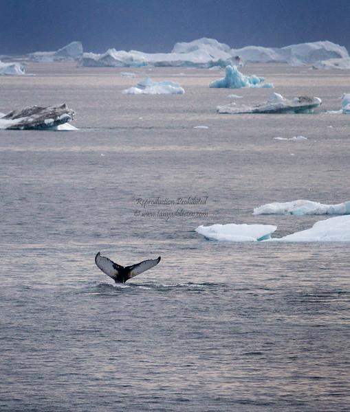 August 17 - Cruise Midtlorfik-Ilulissat