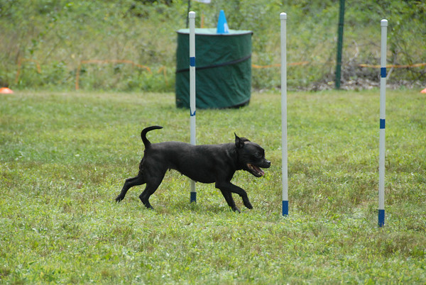 2016-08-20 and 21 NADAC Agility art St. Huberts